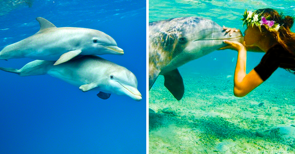 d77525eabfa The Best 20 Locations Around The World To Get Up Close And Personal With  Dolphins