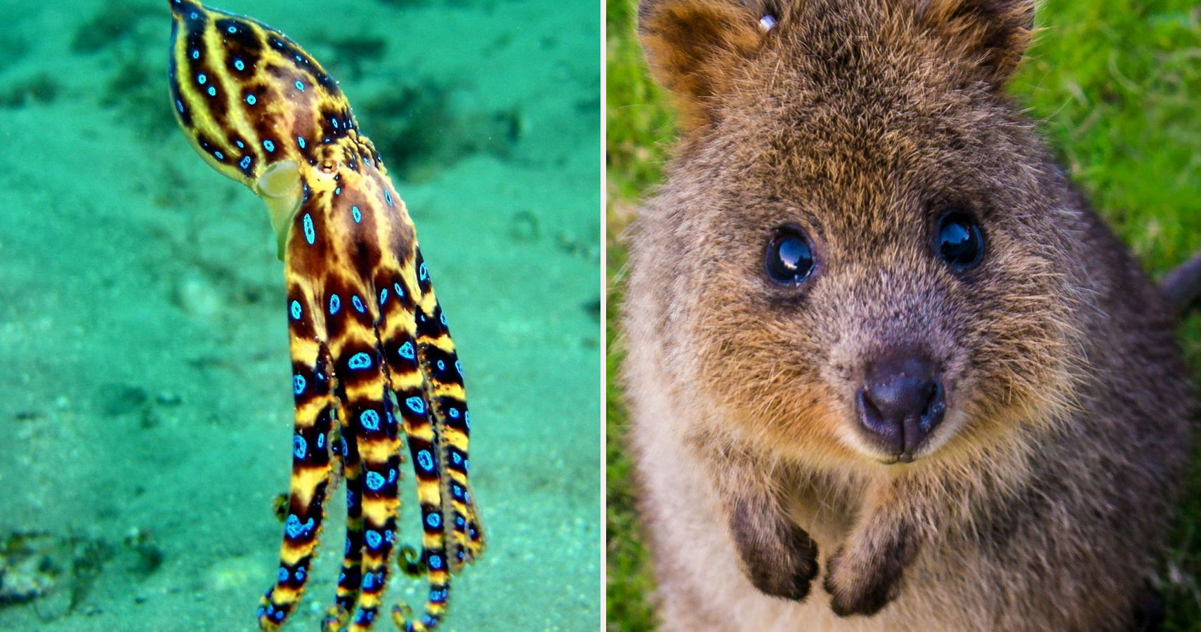 5 Australian Animals That Will Actually Kill Us Amp 5 That