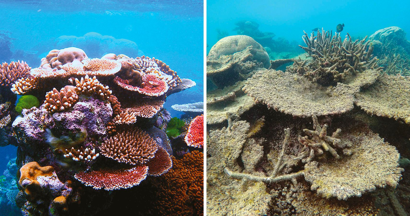 A Shocking Comparison 5 Photos Of The Great Barrier Reef 10
