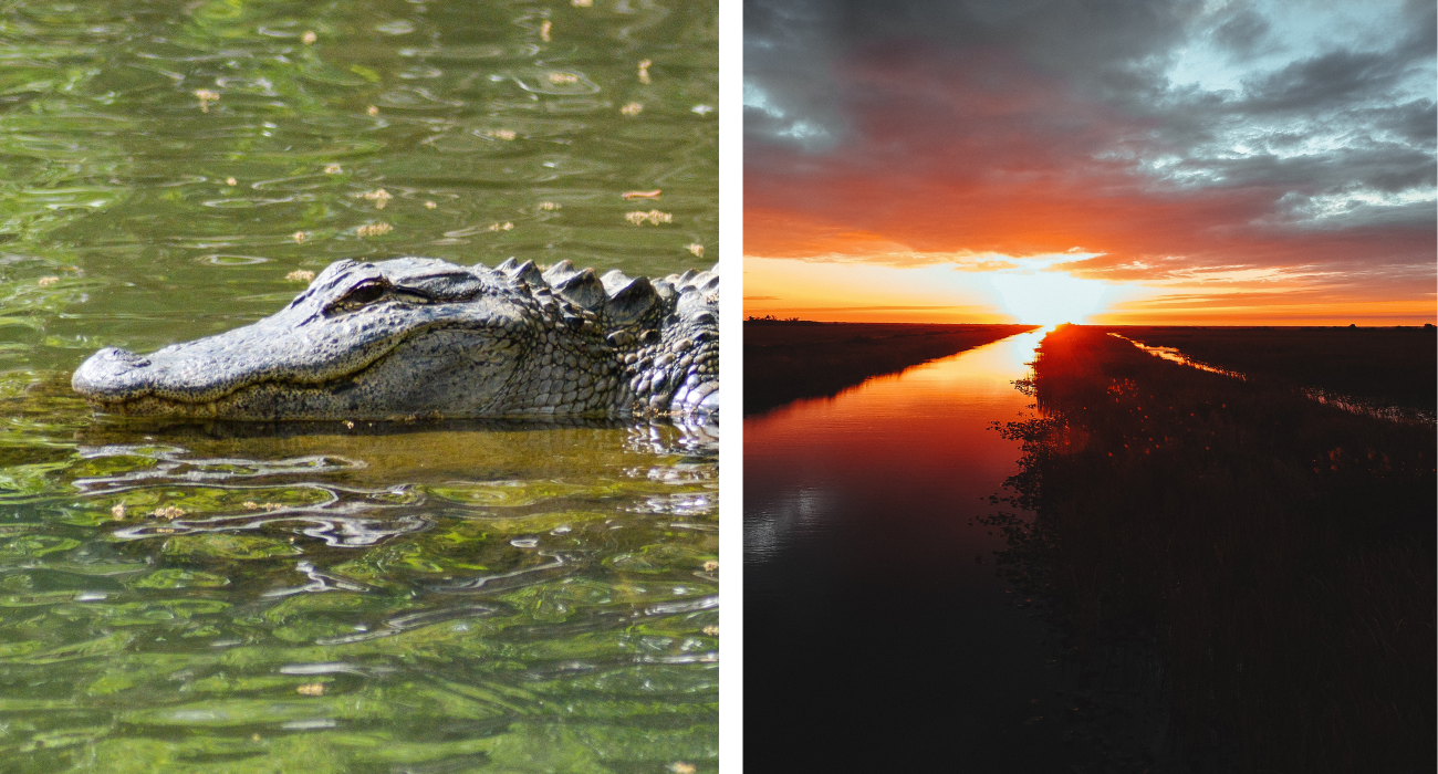 Walking The Anhinga Trail In Everglades National Park Practically Ensures Visitors Will See Alligators