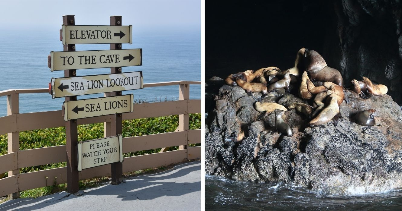 How To Make The Most Of A Trip To Oregon's Sea Lion Caves